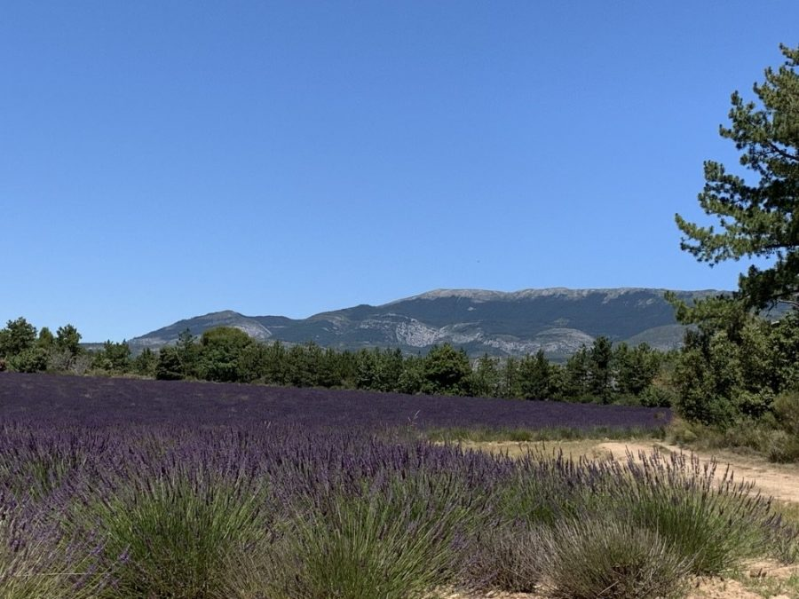 Paint Provence with Tess - Valensole lavender fields